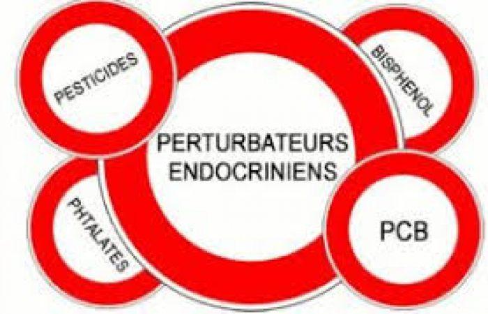 L'efficacité du vaccin compromise par les perturbateurs endocriniens présents dans notre corps ?